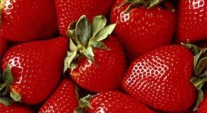 الكشف عن فراولة أرجوانية اللون