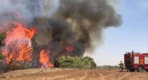 11 فريقاً من إطفاء الاحتلال يعجزون عن السيطرة على حريق هائل أشعلته بالونات غزة الحارقة!