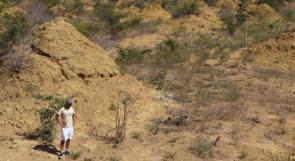 النمل الأبيض بالبرازيل يحتل مساحة تضاهي بريطانيا