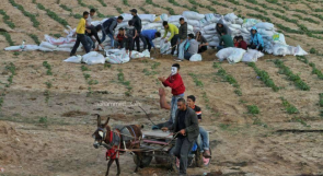 شبان يبنون سواتر رملية على حدود غزة لحماية المتظاهرين من رصاص قناصة الاحتلال