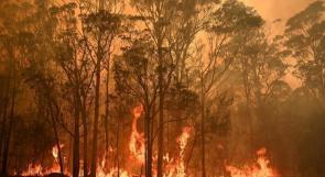 تأثير الحرائق طال 75 بالمئة من الأستراليين