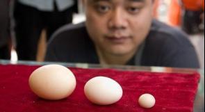 بالصور.. أصغر بيضة في العالم