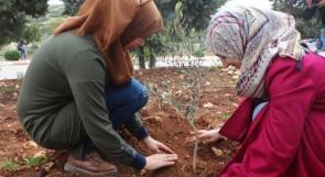 """حملات غرس الأشجار: مجهود شتوي حاضر ومتابعة صيفية """"خجولة"""""""