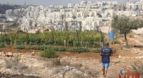 """""""أم سليمان"""".. أول مزرعة عضوية في فلسطين، بلدي يا خيار"""
