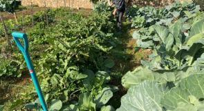 """""""جدلة"""".. مزرعة بيئية أنشئت بحب الزراعة وعشق الأرض"""