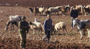 مستوطنون يطردون الرعاة من تجمع شلال العوجا