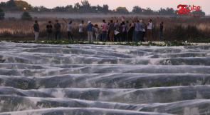 تعاونية جذور الشمس: زراعة جماعية بسواعد شبابية جذورها الأرض وأفقها السماء