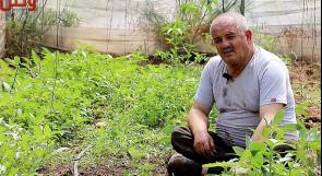 معاناة مزارعي وادي المطوي تتضاعف بعد كورونا.. ومناشدات عبر وطن لدعمهم