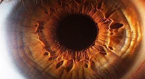 اكتشاف جهاز جديد للعين لاستعادة البصر