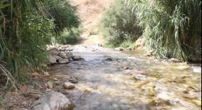 العوجا.. نبع يتدفق بالحياة يسير نحو الجفاف