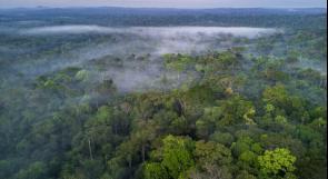 ماذا سيحدث للمناخ إذا زرع كل فرد من سكان الأرض شجرة سنويا لمدة 20 عاما؟