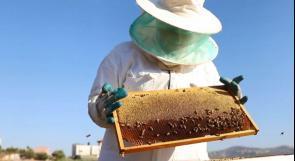 رحلة البحث عن علاج لأشجار اللوز توصلُ يارا إلى صداقة النحل