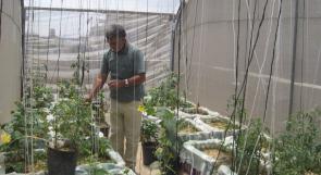 الزراعة المنزلية البيئية دون حديقة
