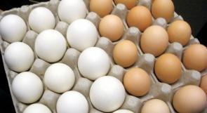 تقارير اسرائيلية تتحدث عن وجود مواد سامة في البيض