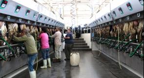 كورونا تهدد قطاع الحليب في المحافظات الشمالية.. ومزارعون يناشدون عبر وطن لإنقاذهم