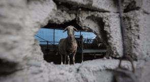 آثار قصف مدفعية الاحتلال للأراضي الزراعية جنوب قطاع غزة