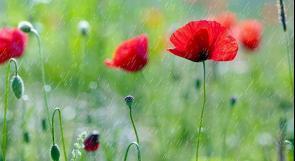 طقس اليوم: انخفاض على درجات الحرارة مع فرصة سقوط أمطار خفيفة