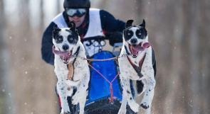 بالصورة... سباقات الكلاب في ألمانيا