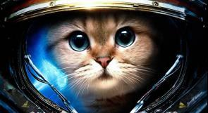 لماذا تجرى التجارب على الحيوانات في الفضاء؟