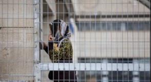 الاحتلال يحكم على الأسيرة المقدسية عائشة الأفغاني بالسجن لمدة 15 عاماً