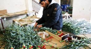 غزة.. ذهب الحب بزهوره، وبقيت الحرب بأسوارها