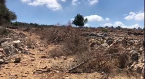 عن معاناة المزارعين في دير استيا… أبو عنترة يعيد زراعة 220  زيتونة اقتلعها المستوطنون من أرضه!