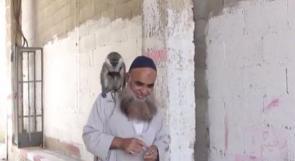 الود يجمع قرداً بالشيخ معاوية في غزة