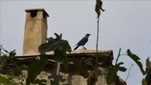 مصرية امتنعت عن تربية الطيور خوفاً من الغراب، فنهش رضيعها !