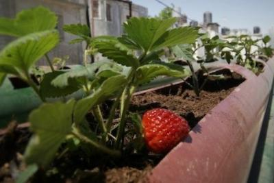 How Hasna revived a barren rooftop to a lively garden