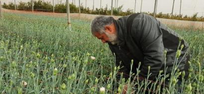 """خاص لـ""""وطن"""" بالفيديو.. طولكرم : إعمير يتمسك بزراعة الورد التي عزف عنها آخرون في الضفة"""