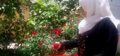 """خاص لـ""""وطن"""" بالفيديو .. ازدهار تحيل """"الورد الجوري"""" لمنتجات غذائية ومواد تجميل خالية من الكيماويات"""
