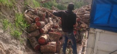 خاص لوطن بالفيديو.. مهنة التحطيب تحييها أزمة الكهرباء.. فهل تسعفها أشجار غزة ؟