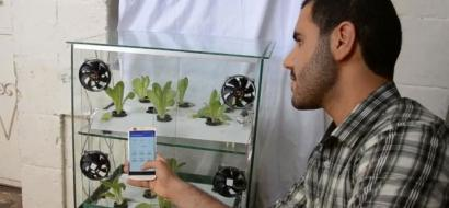 """خاص لـ """"وطن"""" بالفيديو .. طولكرم: شاب يطور مشروعاً للزراعة المائية الذكية من خلال المحمول"""