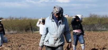 """خاص لـ""""وطن"""": بالفيديو.. عمال الزراعة في غزة: برد قارس وأجور منخفضة"""