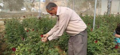 """خاص لـ""""وطن: بالفيديو.. دورا: أول مشروع فردي لزراعة الورد الجوري"""