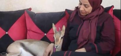 """خاص لـ""""وطن"""" بالفيديو .. نابلس : غزالة """"برية"""" تألف عائلة وتشاركها حياتها اليومية"""