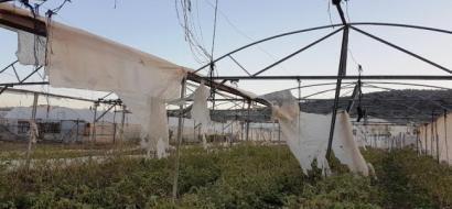 """خاص لـ""""وطن"""": بالفيديو.. المزارعون في طولكرم يحتجون على الحكومة: لم يعوضونا عن خسائرنا كما وعدوا"""