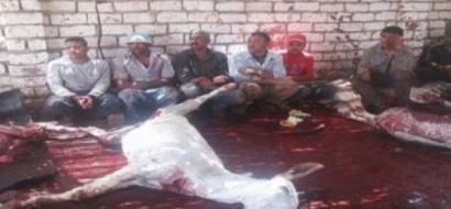 العثور على 25 حمارا مذبوحا بإحدى مدن مصر