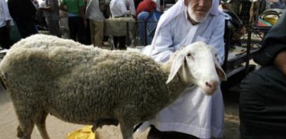 """""""الزراعة"""" تزود مربي الثروة الحيوانية في غزة باللقاحات البيطرية"""