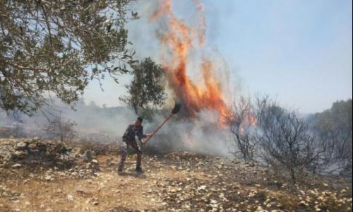 الدفاع المدني يخمد حريقا طال 50 شجرة مثمرة جنوب جنين
