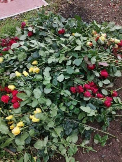 """زهور غزة """"تذبل"""" في مزارعها جراء تفشي جائحة كورونا"""