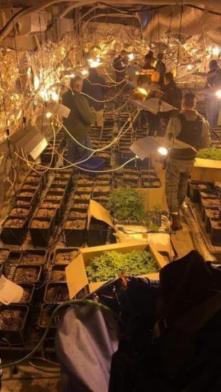 الاجهزة الامنية تضبط مشتلا للمخدرات في قرية قبيا قرب رام الله