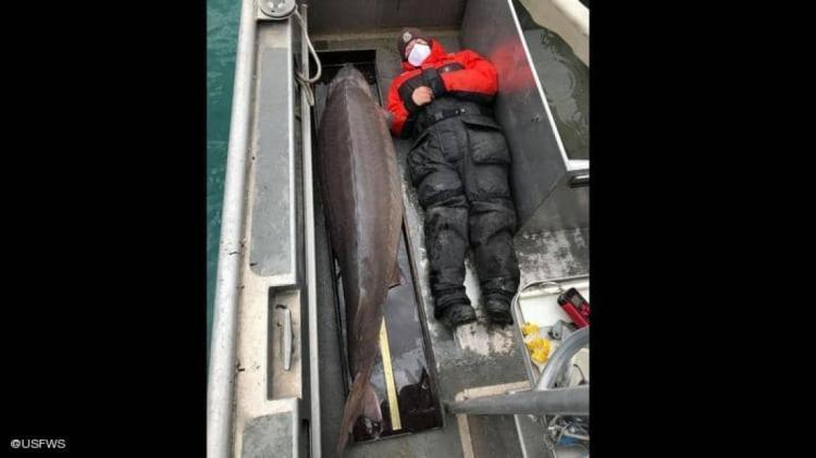 اصطياد سمكة يزيد عمرها على 100 عام في نهر ديترويت