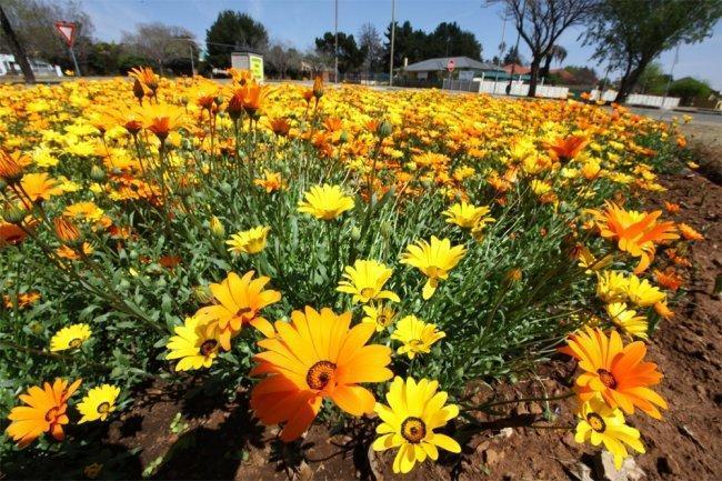 الطقس: ارتفاع على درجات الحرارة والجو حار وجاف ومغبرّ