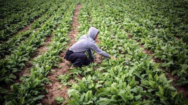 البدء بصرف تعويضات مالية للمزارعين المتضررين من الأحوال الجوية