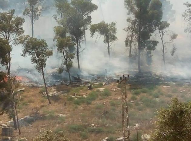 صور .. حريق يلتهم نحو 100 شجرة زيتون وحرجية جنوب جنين