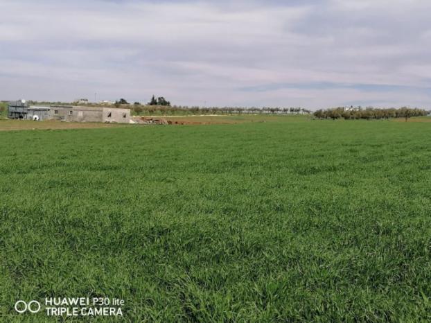 الزراعة الحافظة.. نمط إنتاج للتغلب على تغيرات المناخ وزيادة انتاجية المحاصيل