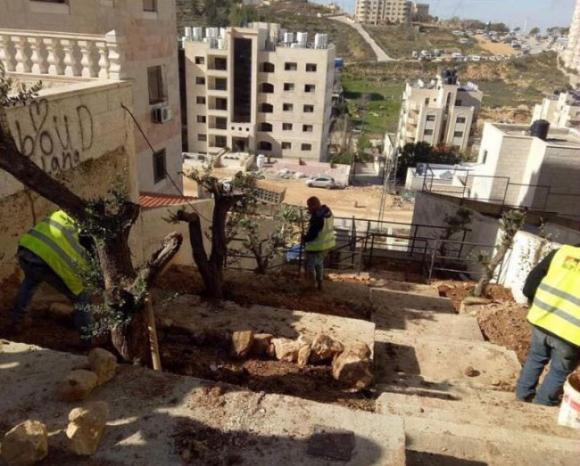 مخالفة تصل لثلاثة آلاف دينار لمن يقوم بقطع الأشجار المعمرة في رام الله