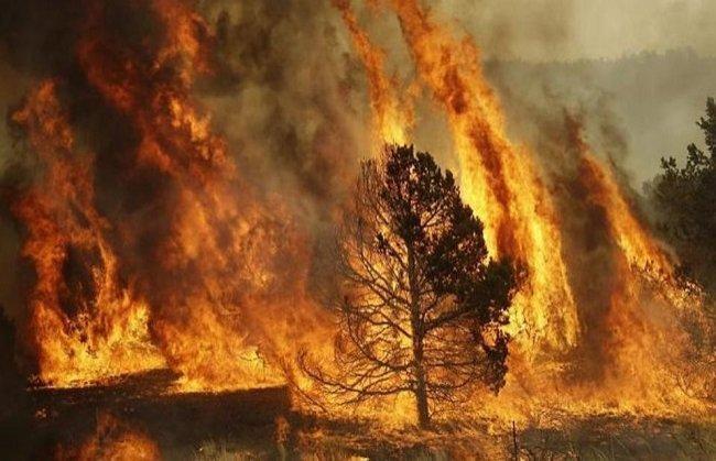 بسبب الحرارة.. اخلاء قرى بأكملها جراء حريق كبير في جزيرة قبرص
