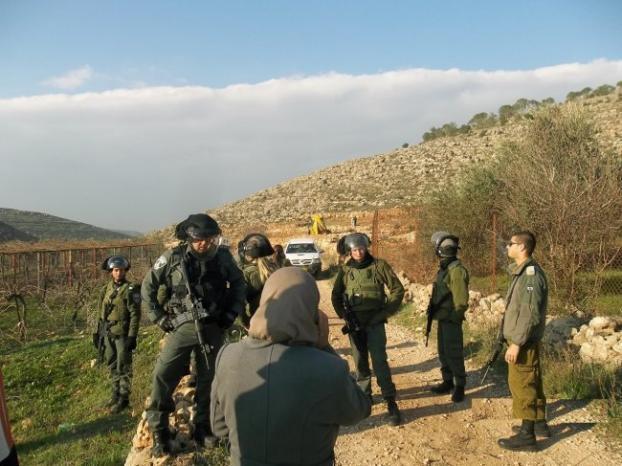 مستوطنون يعتدون على قاطفي الزيتون جنوب نابلس